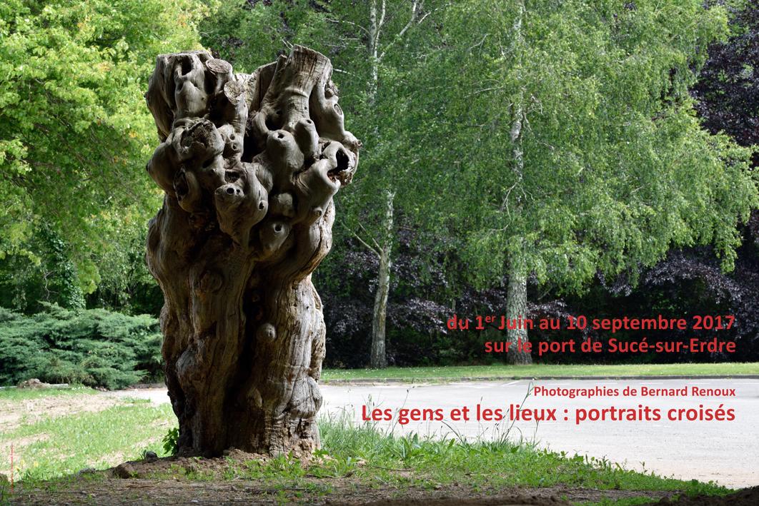 L'émonde de châtaignier du site de la Papinière, Sucé-sur-Erdre.